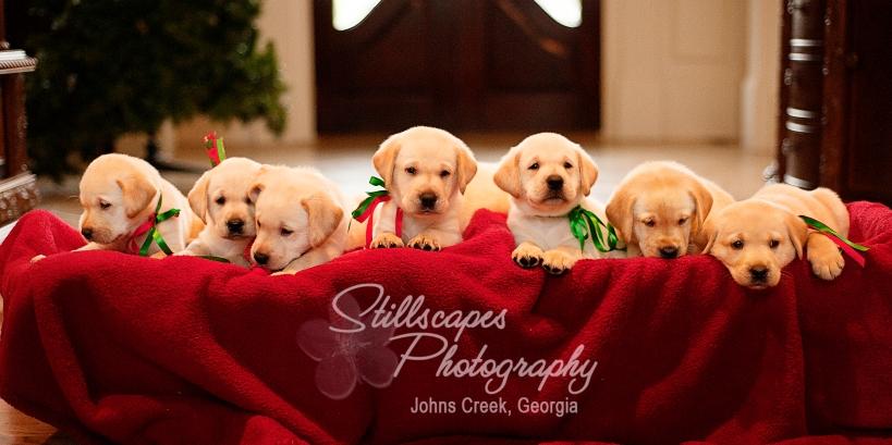 Seven Little Babes